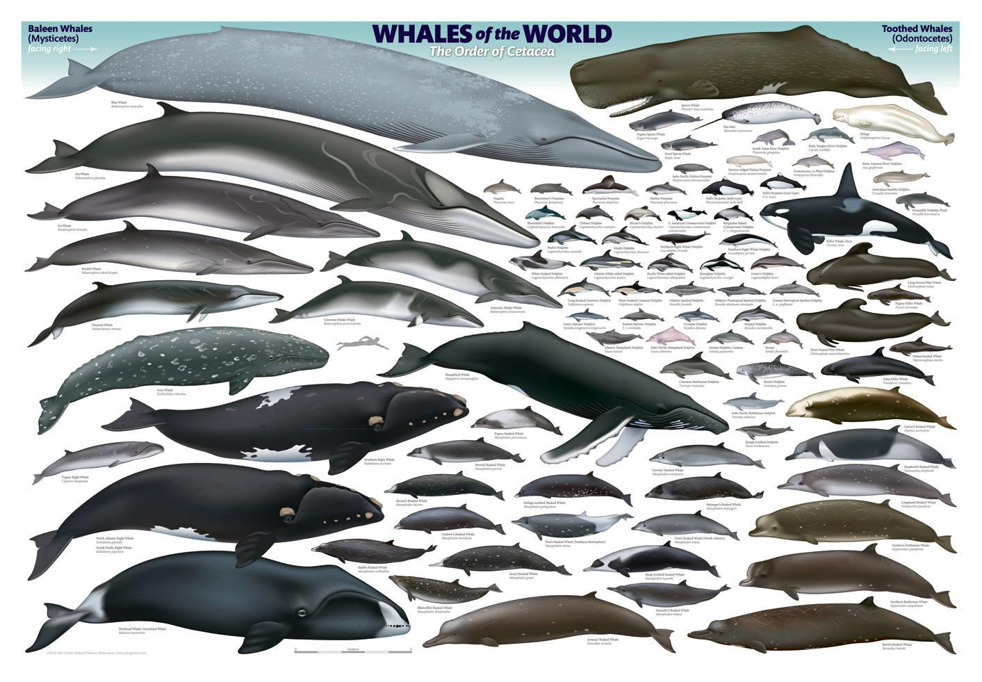 ukogorterposterwhales-world.jpg (1413×981)