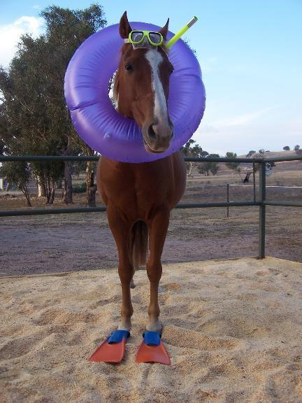 Googled seahorse and got this.. - Imgur