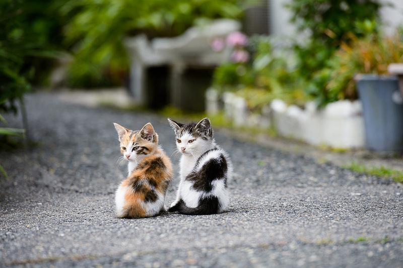 together | Flickr - Photo Sharing!
