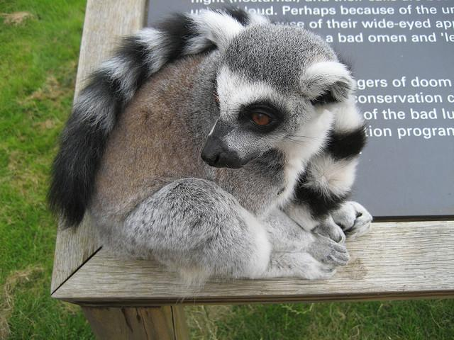 Lemur Signs | Flickr - Photo Sharing!