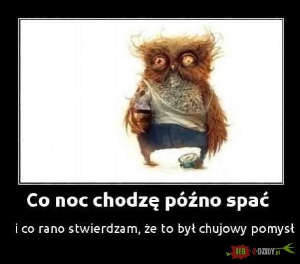 JEBZDZIDY - Najgorsze dowcipy w Internecie!
