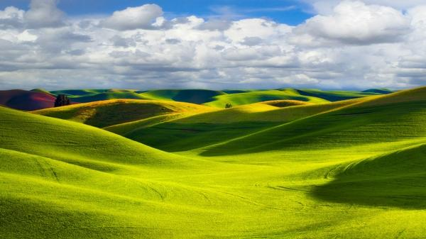 fields,wheat fields wheat washington 1920x1080 wallpaper – Fields Wallpaper – Free Desktop Wallpaper