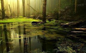 Forest Lake theme - Toevoegen aan uw startpagina