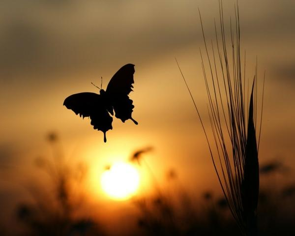 butterfly butterfly 1280x1024 wallpaper – Butterflies Wallpapers – Free Desktop Wallpapers
