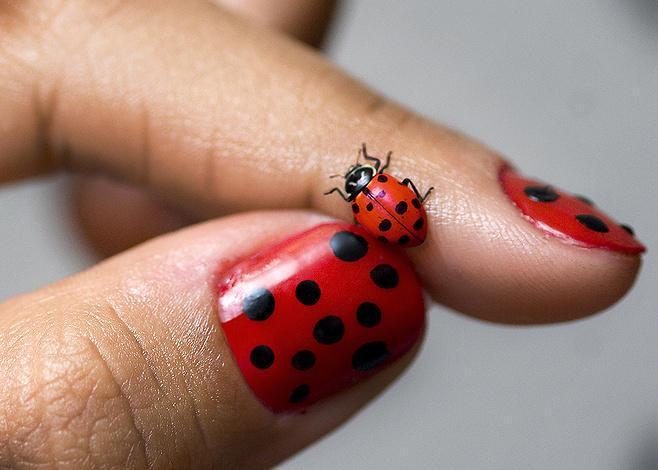 lady bug nail art - StyleCraze