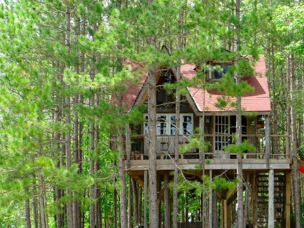 Lynn Knowlton's Eco Friendly Tree Fort - Enpundit