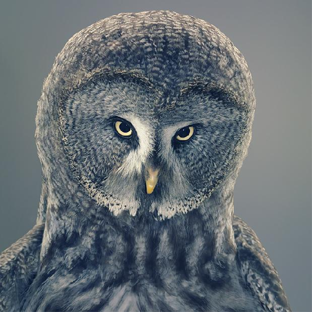 Photos incroyables par Tim Flach - TutorArt | Inspiration Design graphique, Cartes busniess, Photo, Études de cas