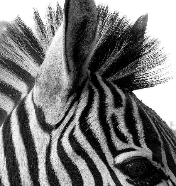 125 Fantastics Photographies en noir et blanc | TutorArt | Inspiration Design graphique, Cartes busniess, Photo, Études de cas
