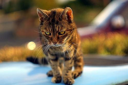 Serious_Cat_647.jpg (500×333)