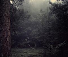 forest on We Heart It