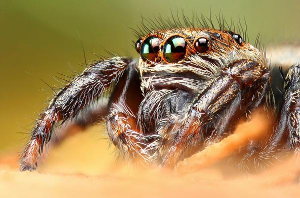 Macro Photography by Dusan Beno | Professional Photography Blog
