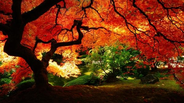 nature,trees nature trees autumn 2560x1440 wallpaper – Trees Wallpapers – Free Desktop Wallpapers