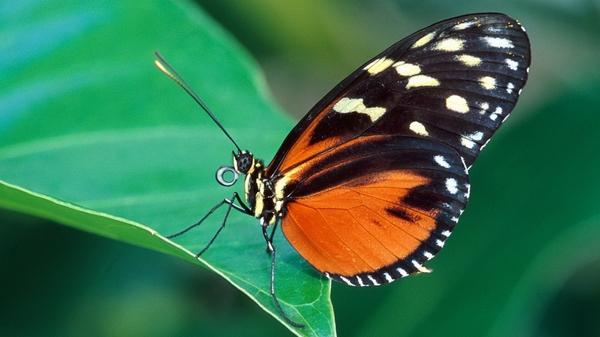 nature,butterfly nature butterfly insects 1920x1080 wallpaper – Butterflies Wallpapers – Free Desktop Wallpapers