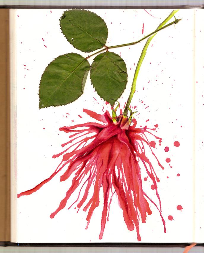 In focus: Illustrator Laura Serra Â« From up North | Design inspiration & news