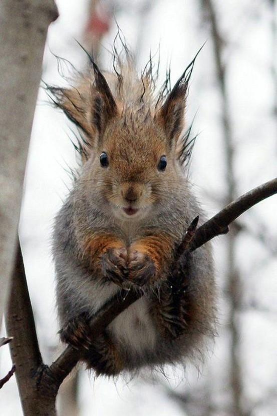 Cute, cute, mega cute / Even squirrels have bad hair days! LOL!
