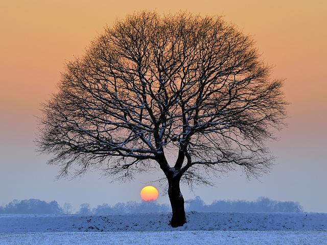 icy winter | Flickr – Condivisione di foto!