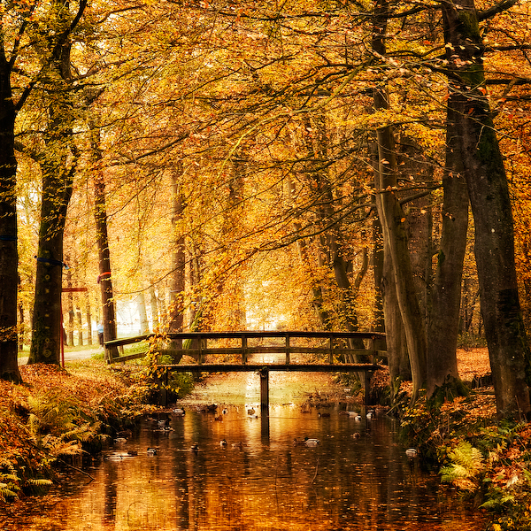 Amber Autumn by =Oer-Wout