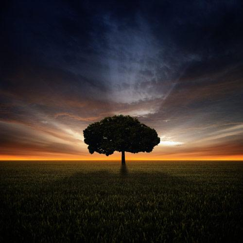 Pictures of Trees - Beautiful and Impressive Tree Photos Inspiration
