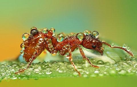 Macro photos of insects covered in dew drops — Lost At E Minor: For creative people