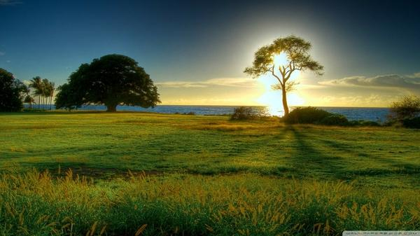 trees,sunset sunset trees sea meadow 1920x1080 wallpaper – Sunsets Wallpapers – Free Desktop Wallpapers