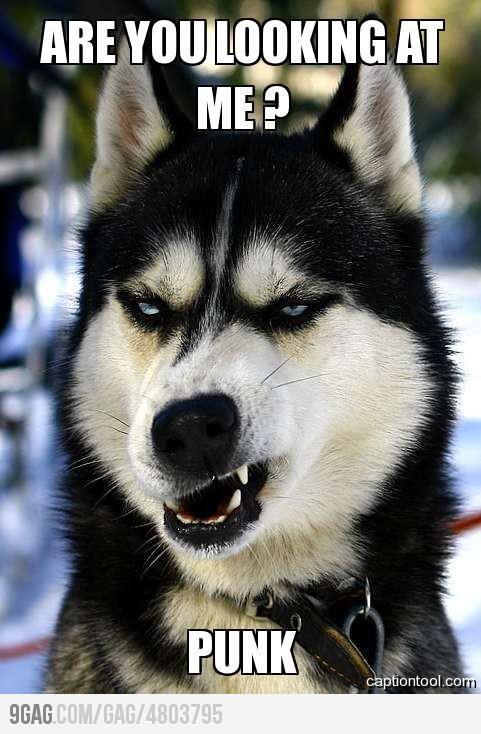 9GAG - Badass Dog!