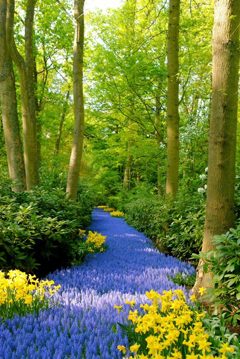 Peaceful Photographs / Blauwe Pad, Keukenhof-Lisse, Nederland
