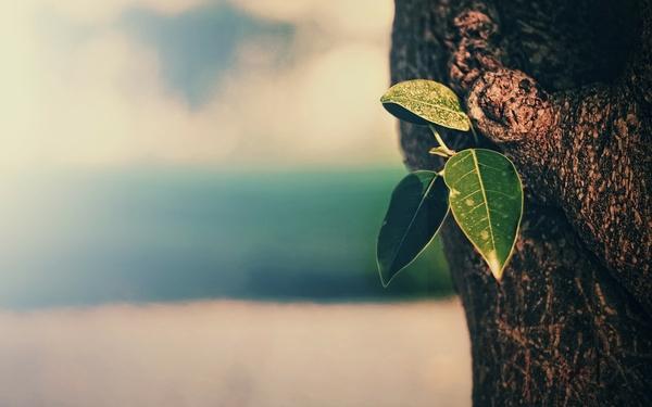 trees,leaves trees leaves macro depth of field 1920x1200 wallpaper – Macro Wallpapers – Free Desktop Wallpapers