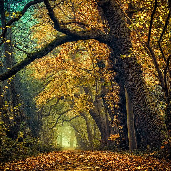 Deeper shades of Autumn by =Oer-Wout