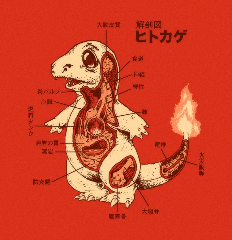 Charmander Anatomy by *RYE-BREAD