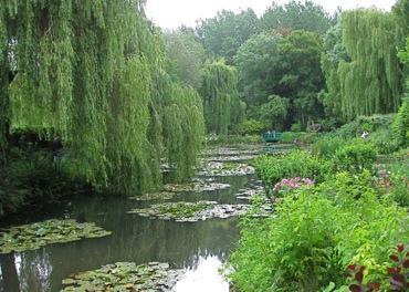 lilies_2633.jpg 370×264 pixels
