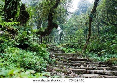 stock-photo-nepalian-rainforest-with-pathway-76469440.jpg 450×320 pixels