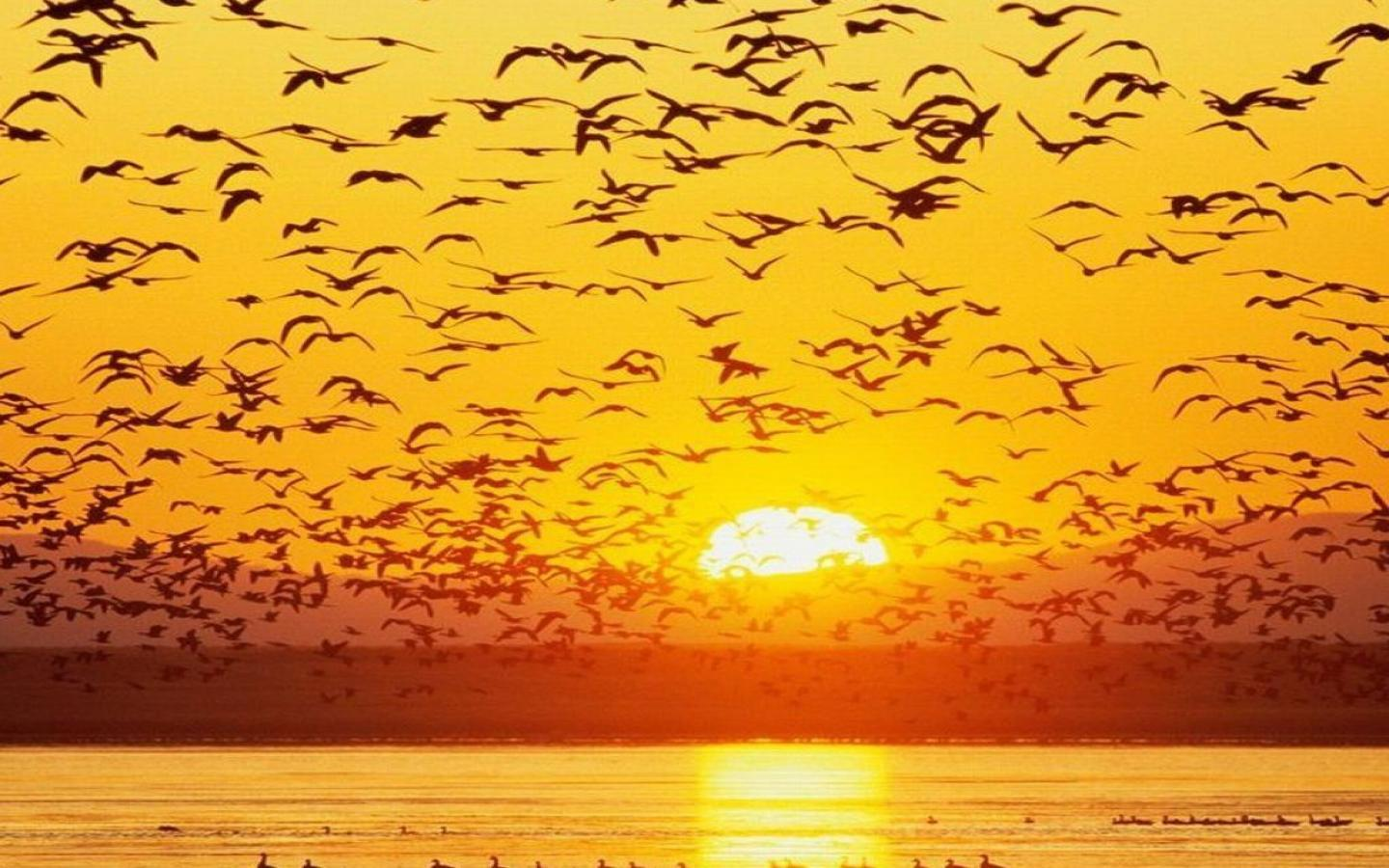 Sunrise Birds Images hd Flying Birds Sunrise