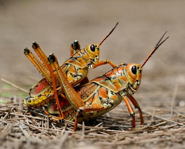 close-up,nature closeup nature bugs grasshopper 3210x2592 wallpaper – Bugs Wallpapers – Free Desktop Wallpapers