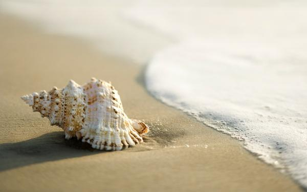 nature,beach nature beach shell macro 1920x1200 wallpaper – Macro Wallpapers – Free Desktop Wallpapers
