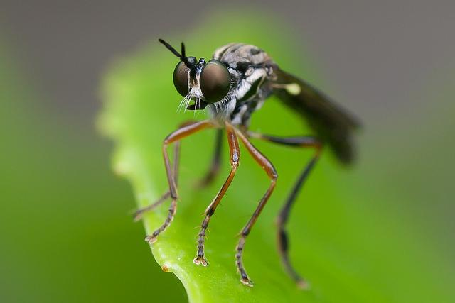 Nature Photography by Johan van Beilen