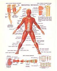70s Medical Illustrations Scans - a set on Flickr