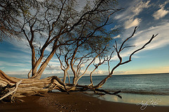 maui - Flickr: Search