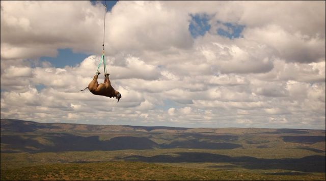The Flying Rhino (13 pics) - Izismile.com