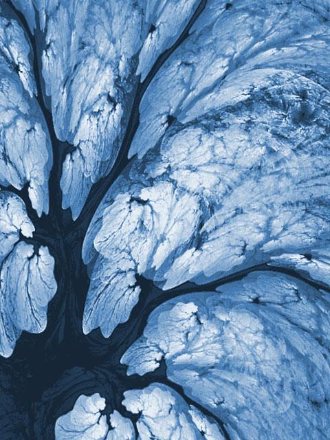 fractal flames ice trees