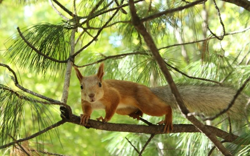 animals,wildlife animals wildlife squirrels 1920x1200 wallpaper – animals,wildlife animals wildlife squirrels 1920x1200 wallpaper – Wildlife Wallpaper – Desktop Wallpaper