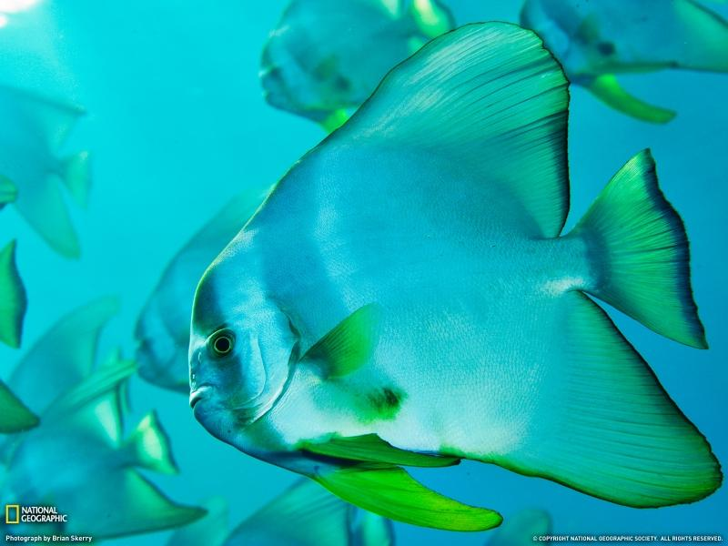 fish,underwater fish underwater 1600x1200 wallpaper – fish,underwater fish underwater 1600x1200 wallpaper – Fish Wallpaper – Desktop Wallpaper