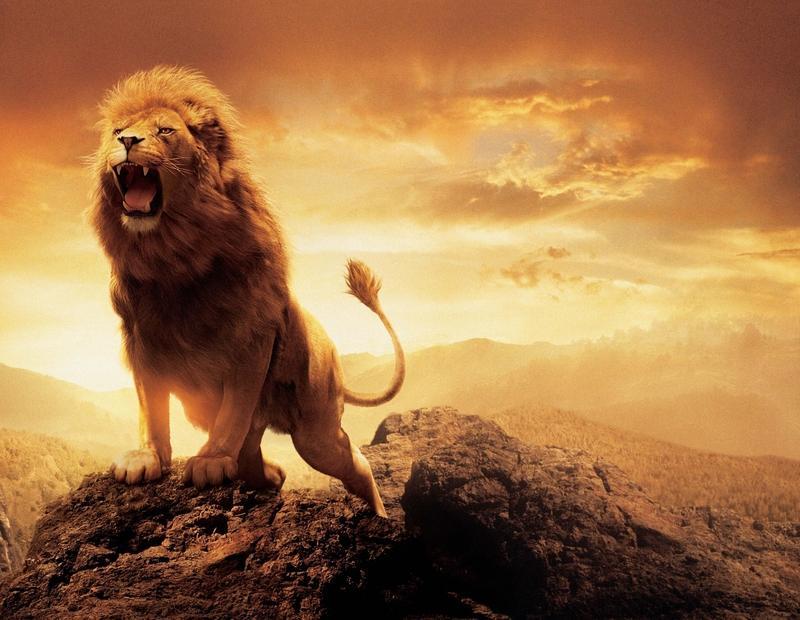 movies,Narnia movies narnia lions 5000x3878 wallpaper – movies,Narnia movies narnia lions 5000x3878 wallpaper – Lion Wallpaper – Desktop Wallpaper