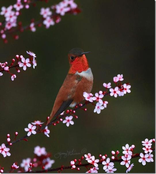 """Фотоподборка: """"Цвета весны"""""""