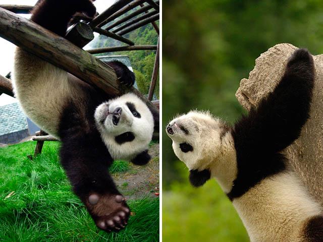 Весёлые развлечения медведей