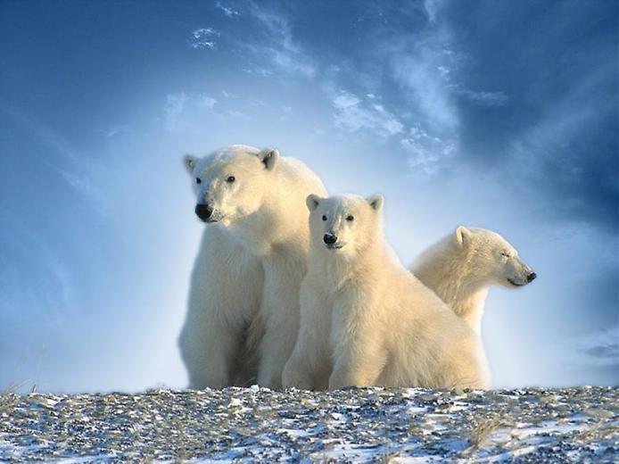 Белый — цвет зимы