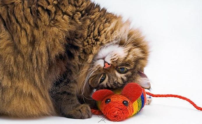 Фотографии котов: Фотопозитив