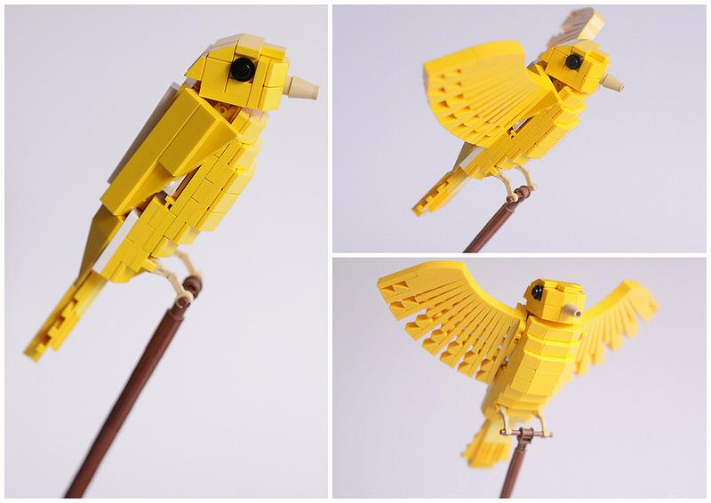Carona Canary | Flickr - Photo Sharing!