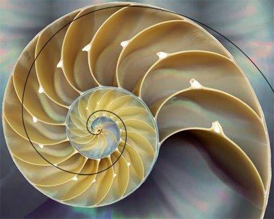 O que é fractal « Aido Bonsai