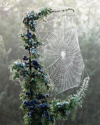 Garden Inspired - Polyvore