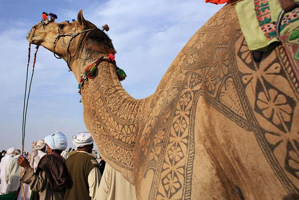 Amazing Camel Hair Art at Bikaner Camel Festival | Bored Panda